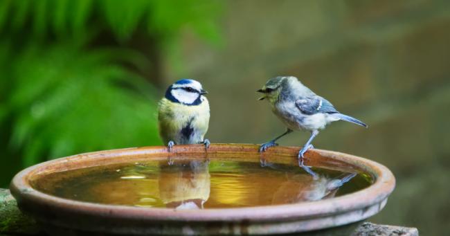 due uccellini sull'acqua